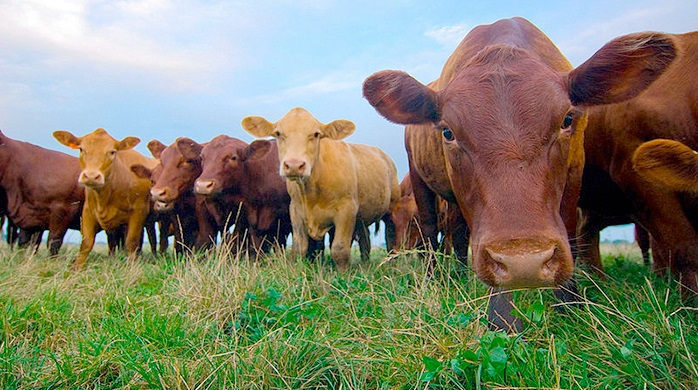 Animal disease programmes do a 'good job of containing disease but cost-effectiveness unclear'
