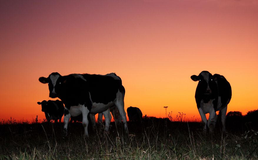 The dairy sector remains under extreme pressure