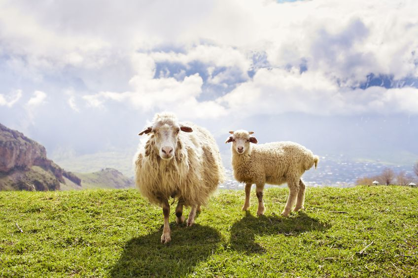 Today's Scottish parliament elections bring new dynamic for the future of farmers and crofters