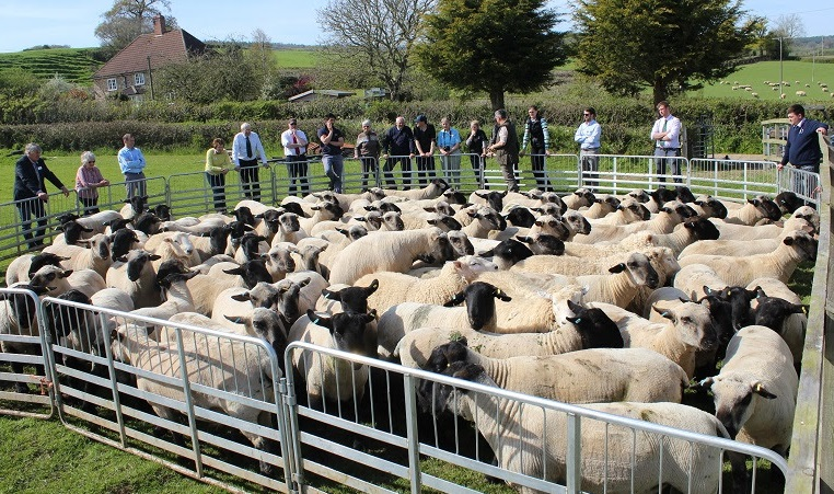 Sheep breed societies come together for industry update and debate