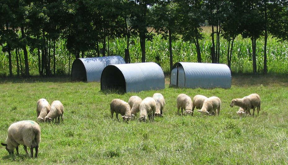Hostelling scheme for stolen sheep gets national funding