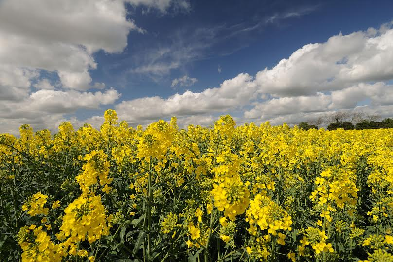 Global trade of oilseeds and grain grow by 150m tonnes in last 5 years