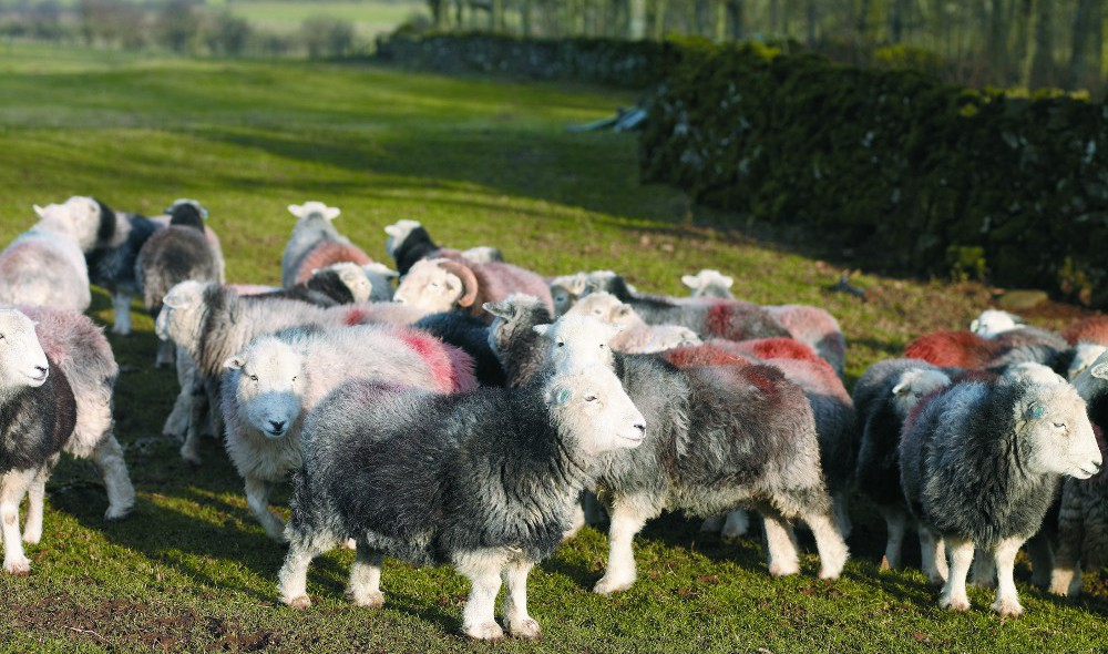 British Wool Marketing Board invests in new marketing initiatives to drive demand