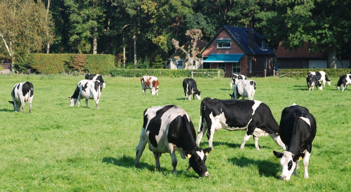 European Medicines Agency supports continued use of last-resort human antibiotic in farming