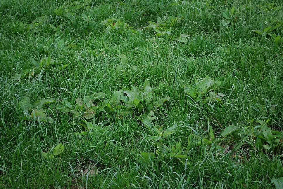 Professional approach needed to control weeds in grassland