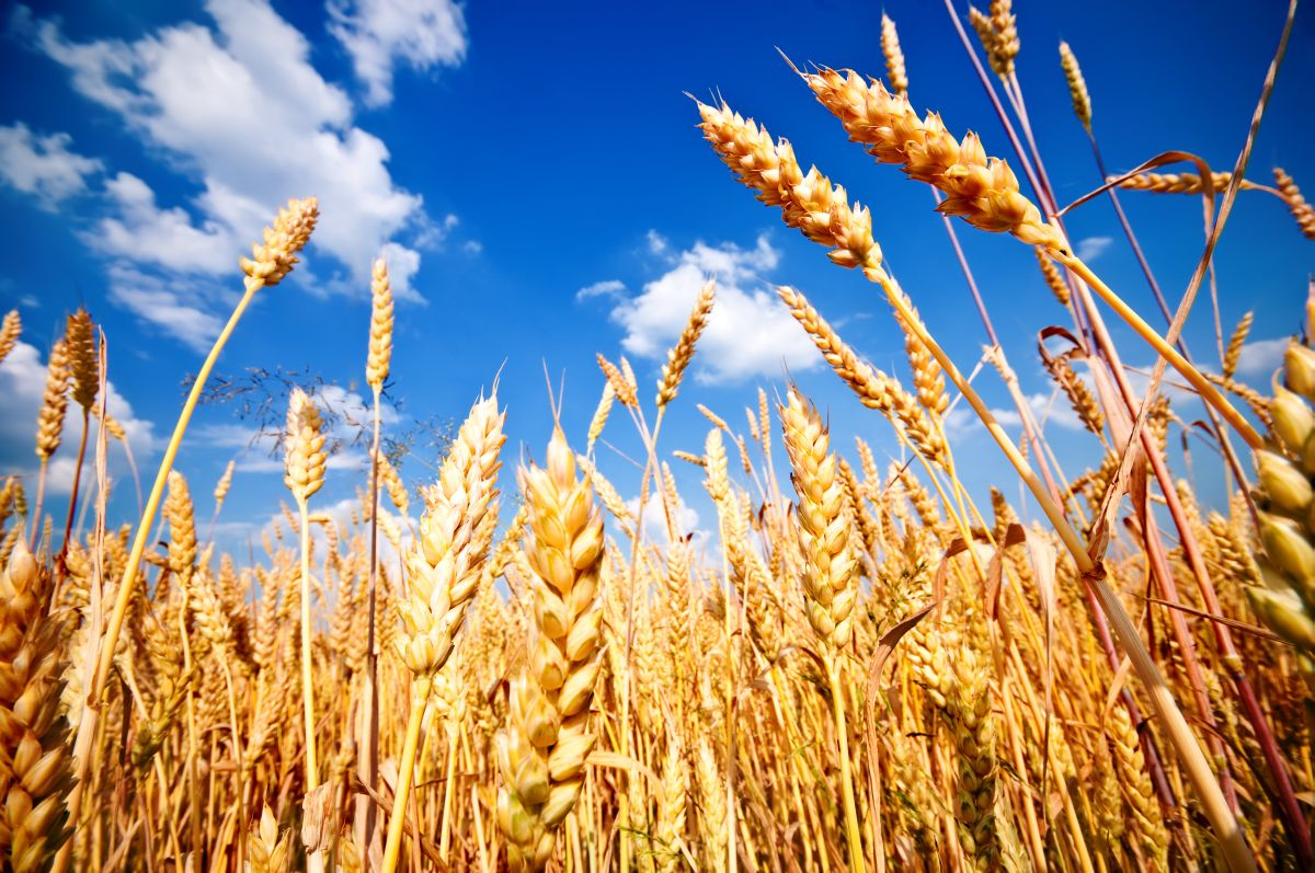 AHDB Cereals releases target market reports for Portugal, Spain, Morocco and Algeria