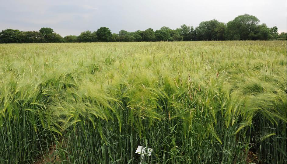 Black-grass focus week highlights integrated approach success