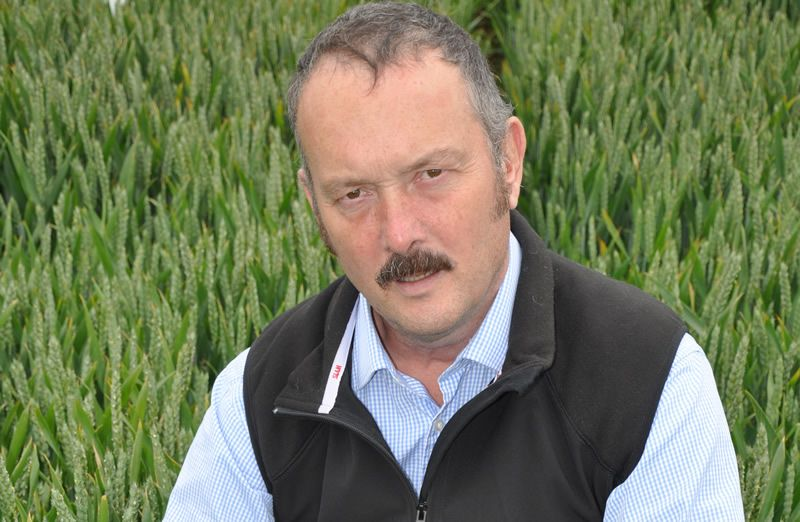 Stay ahead of late season foliar disease to protect grain-filling, wheat growers urged