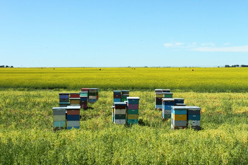 Farmers relay the message of bee importance to crops and food