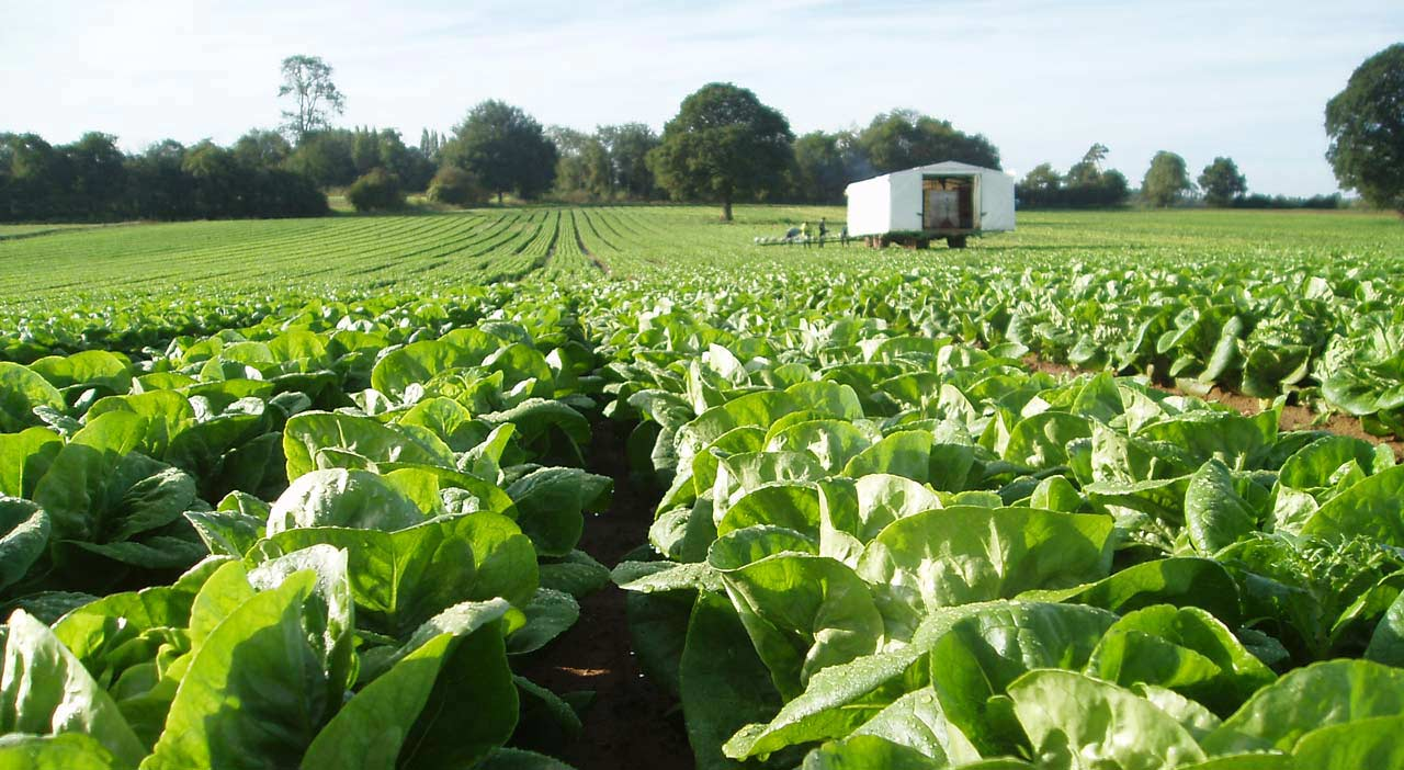 Nuffield Farming Scholarships announce new award for the horticultural sector