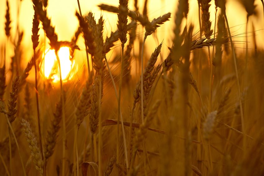 Crop yields will fall within next decade due to climate change unless action is taken, says new study