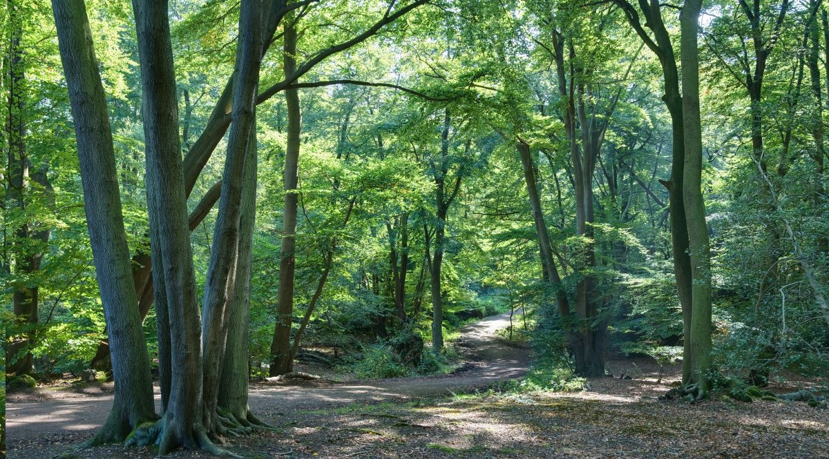Investing in small woodlands a 'potentially lucrative' way to make money