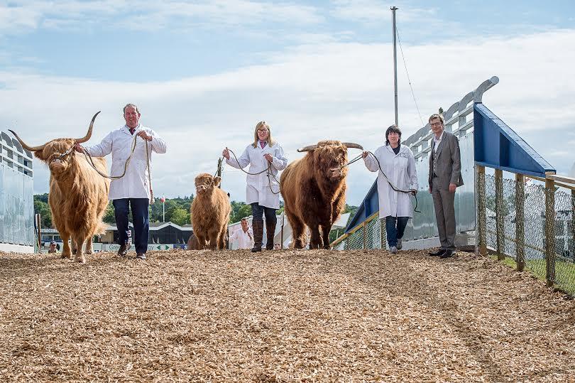 Cow flyover keeps everyone 'moo-ving'