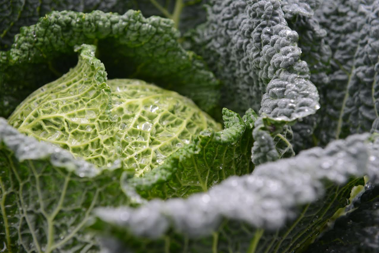 Brassica alert texts the time for disease treatment