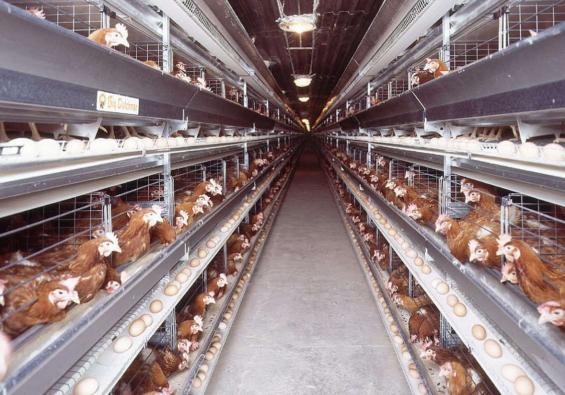 'Major blow to egg producers': Union's response to Tesco phasing out caged eggs by 2025