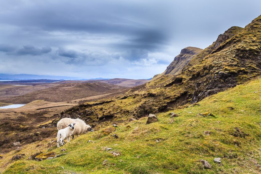 New report explains the economic, environmental and societal benefits of sheep in uplands
