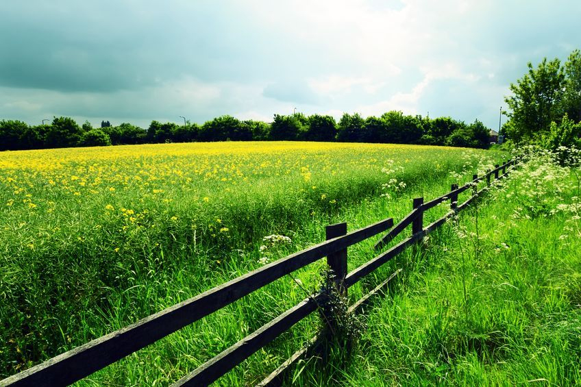 Subdued farmland market as sellers await Brexit terms