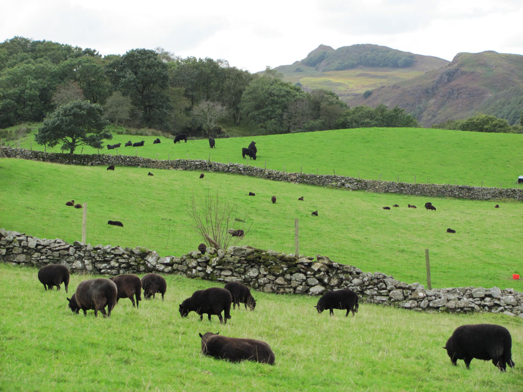 Development opportunity offered to sheep industry advisers