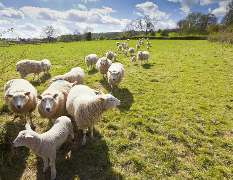 Sheep farmers find ways of adding value to finished lamb so profits can improve