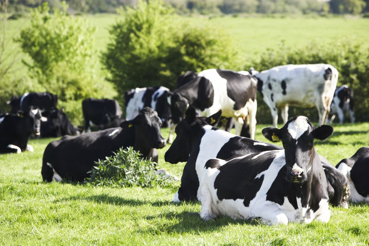 Global demand for organic British dairy sees huge growth potential