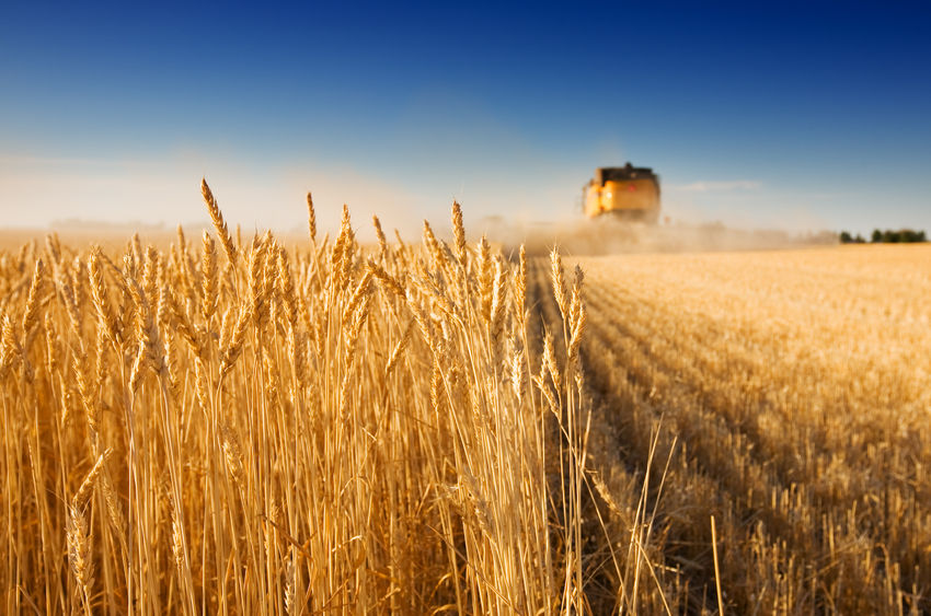 Livestock farmers encouraged to support cereal farmers this harvest