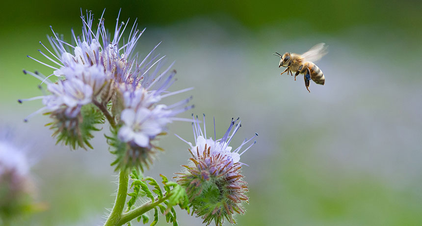 The research highlights consolidation of the agri-food industries as a major potential threat to pollinators...