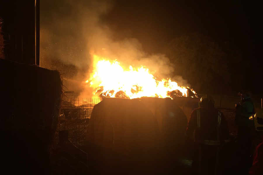West Midlands barn fire kills 10 cattle with police blaming deliberate arson