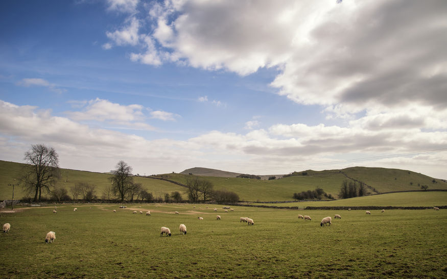 Brexit 'chance for farming to become more diverse and environmentally resilient', say campaigners