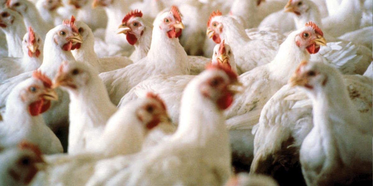 Two thirds of people think industry should reduce campylobacter further