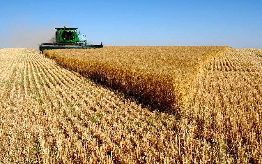Wheat yields are close to the five-year average