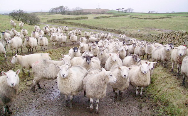 Deadline approaching for Monitor Farm applications
