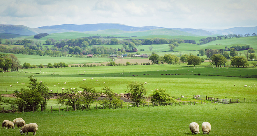 Farming charity launches new initiative to help raise funds for sheep farmers