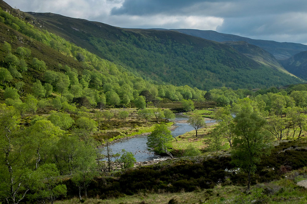 Plan to complete devolution of £1bn Scottish forestry sector