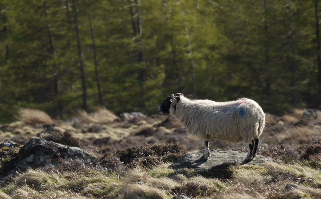 Liver fluke and lungworm threaten livestock this autumn, says NADIS and Merial‏