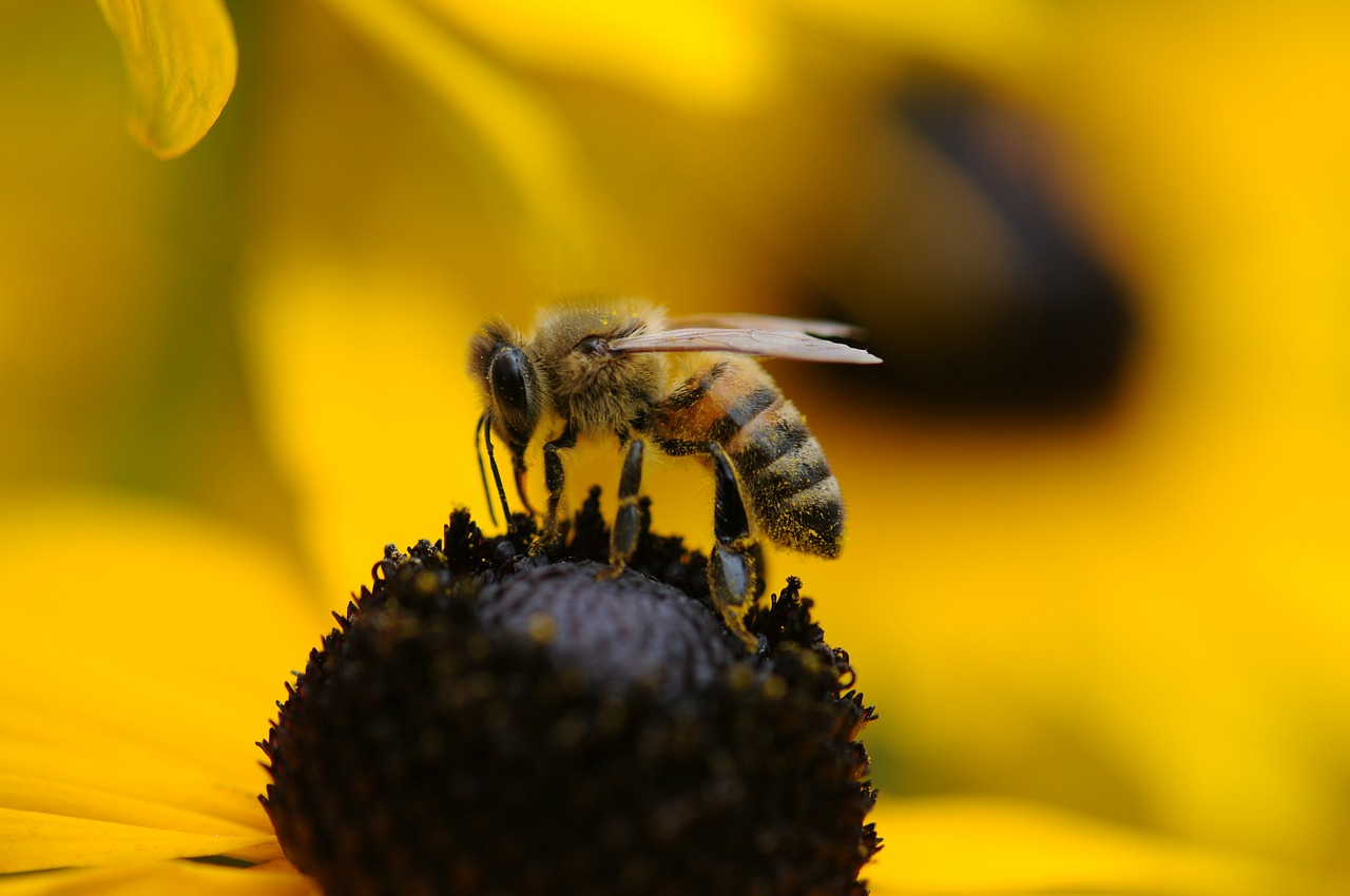 National initiative 'Bee Friendly' created to encourage people to help pollinators