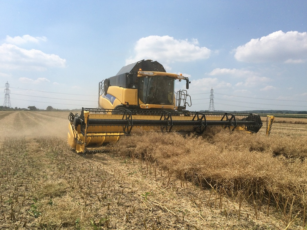 Oilseed rape performs despite difficult year