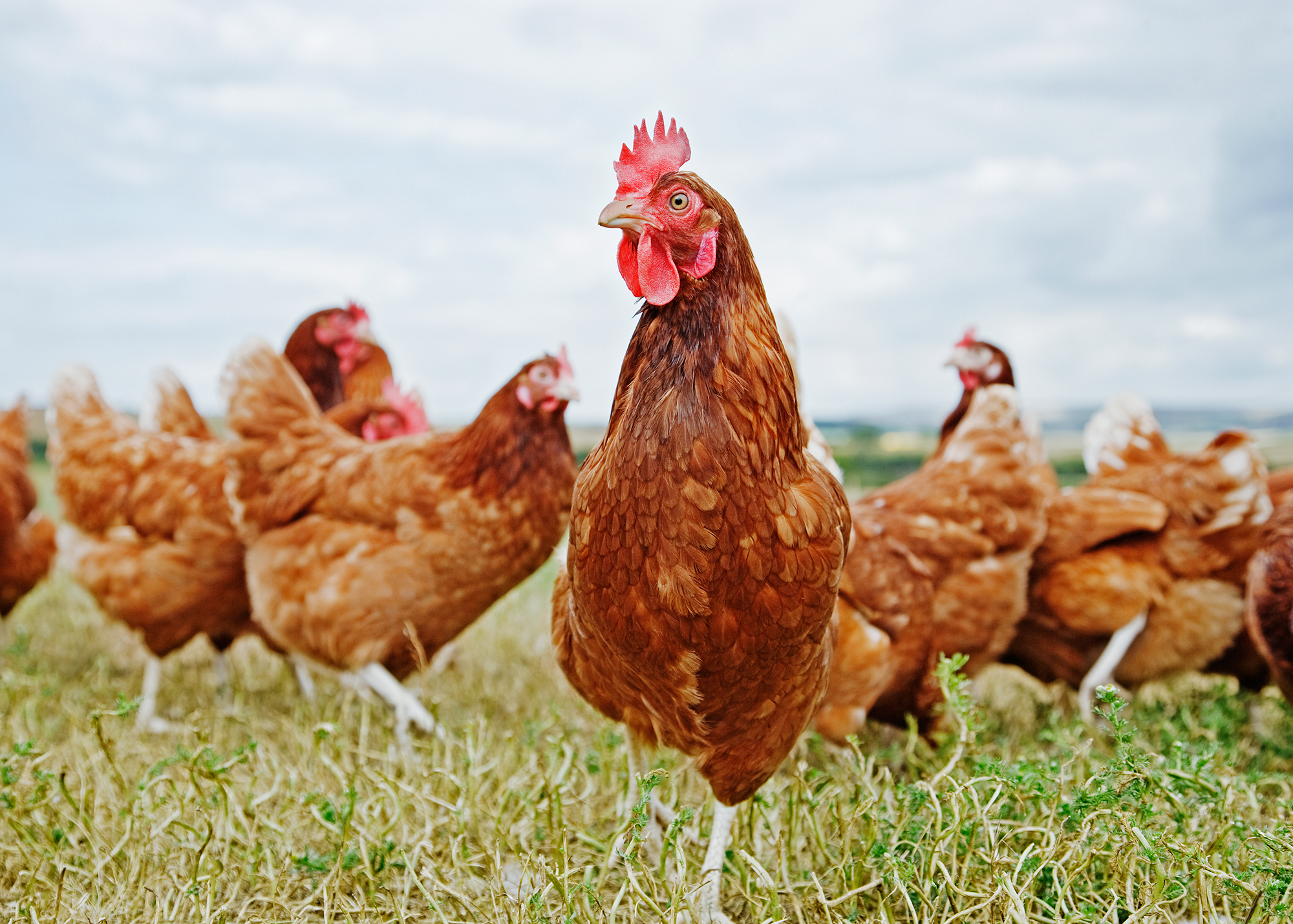 Compass' move follows a summer of cage-free momentum