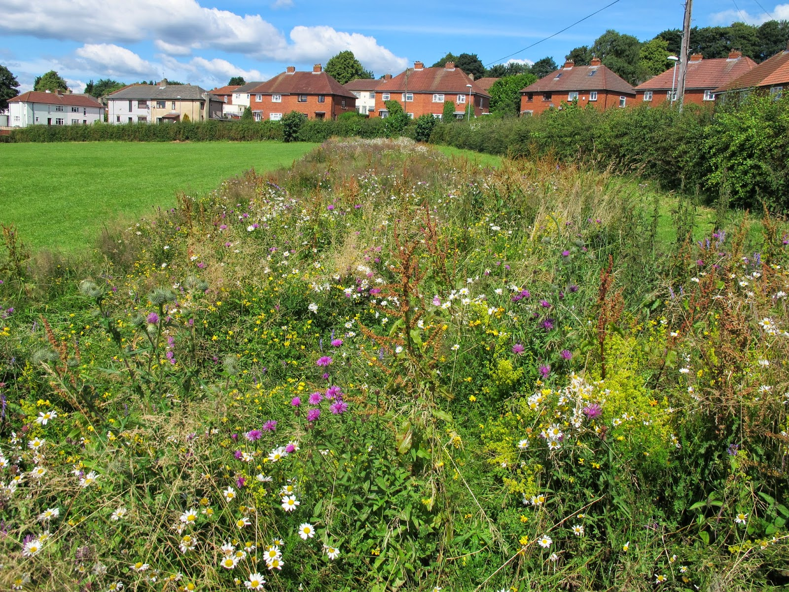 Residents in urban settlements can play 'major role' in ensuring pollinators survive