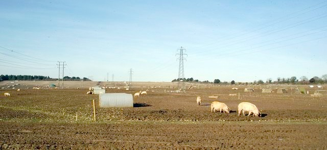 Pig industry sets out priorities and wants as Brexit date set
