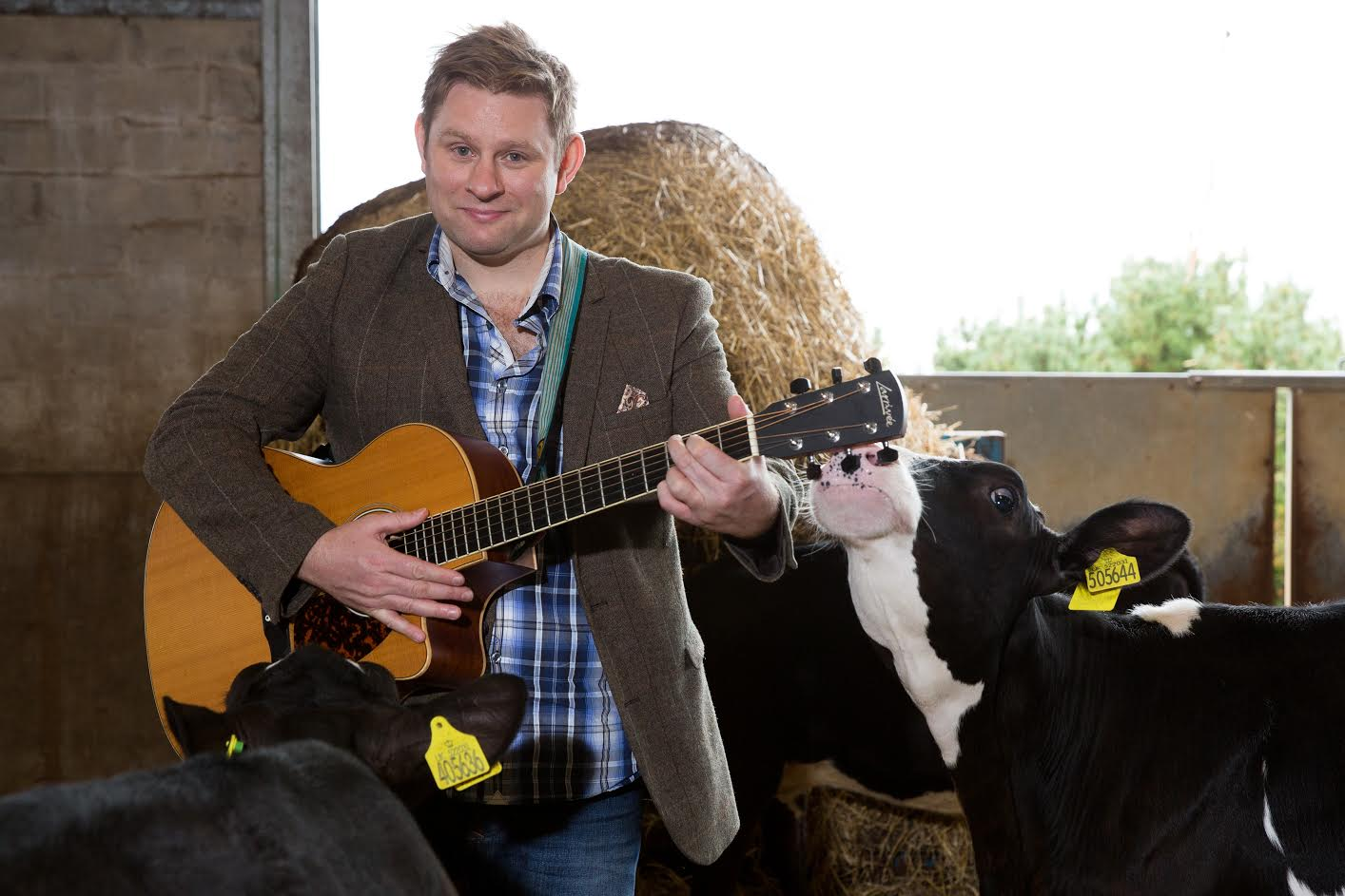 'Cows curious about country choons': Test shows cows interested in music