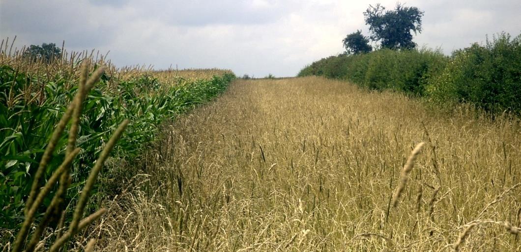 Green MEPs urge EU to close pesticide loophole
