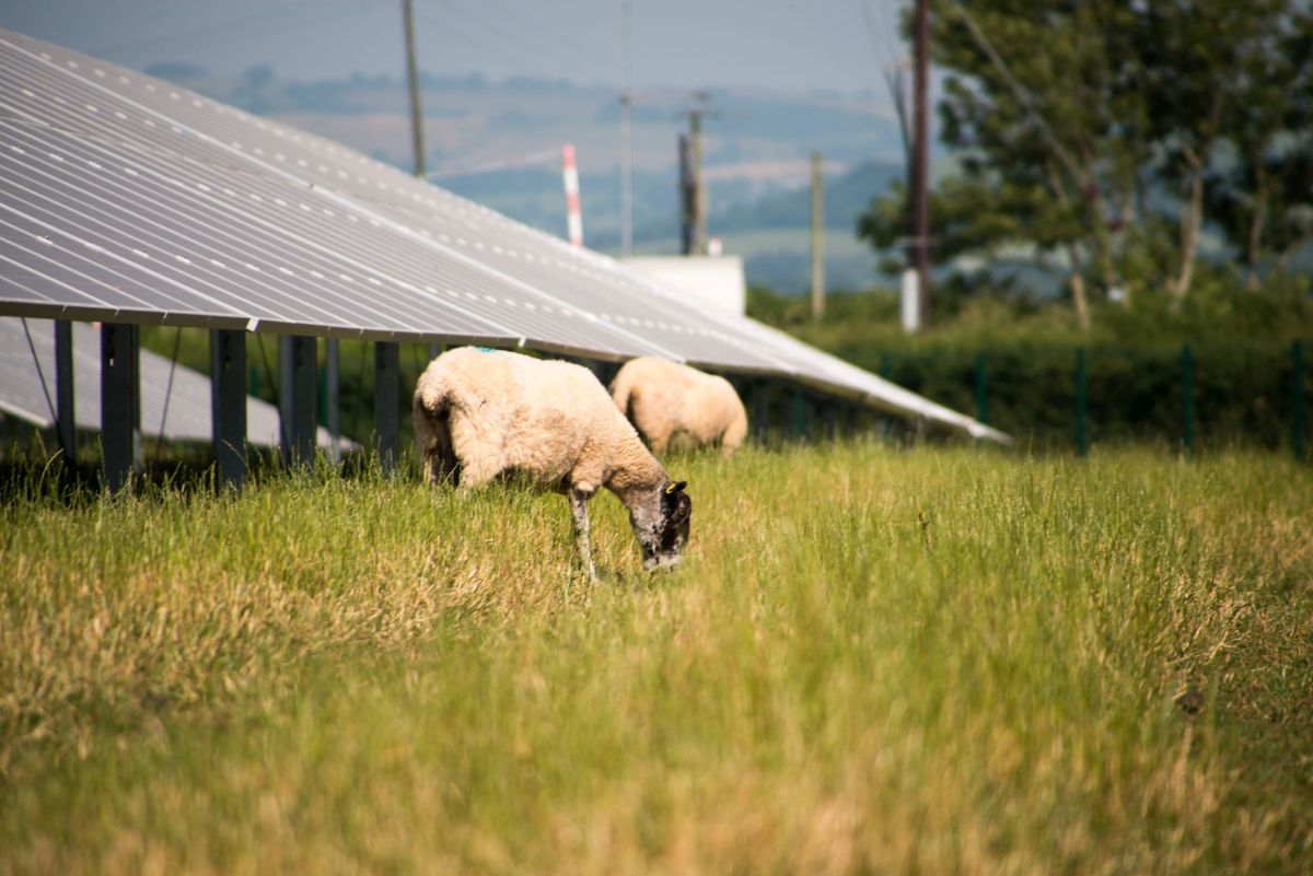New government report shows agriculture has not reduced emissions