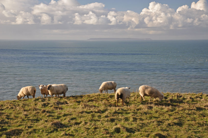 NFU post-Brexit consultation finds farmers want Norwegian model for trade within EU