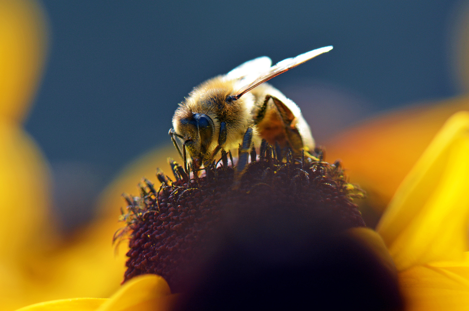 'Seed treatment is not harmful to bees': Bayer launches huge scientific study into neonicotinoids