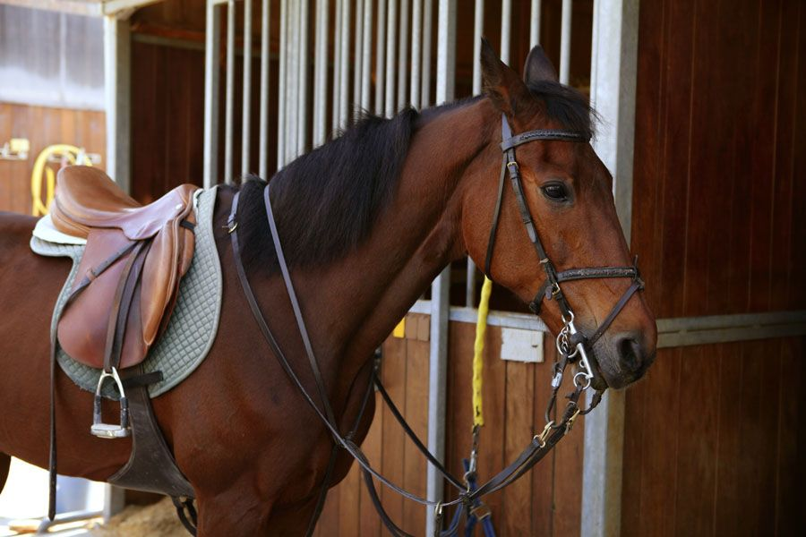 Police have issued a warning to horse owners about a recent spate of thefts in North Yorkshire