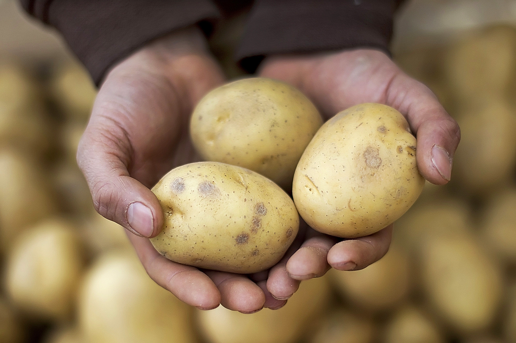 Weakening pound: Unusual market dynamics in Northern-European potato trade