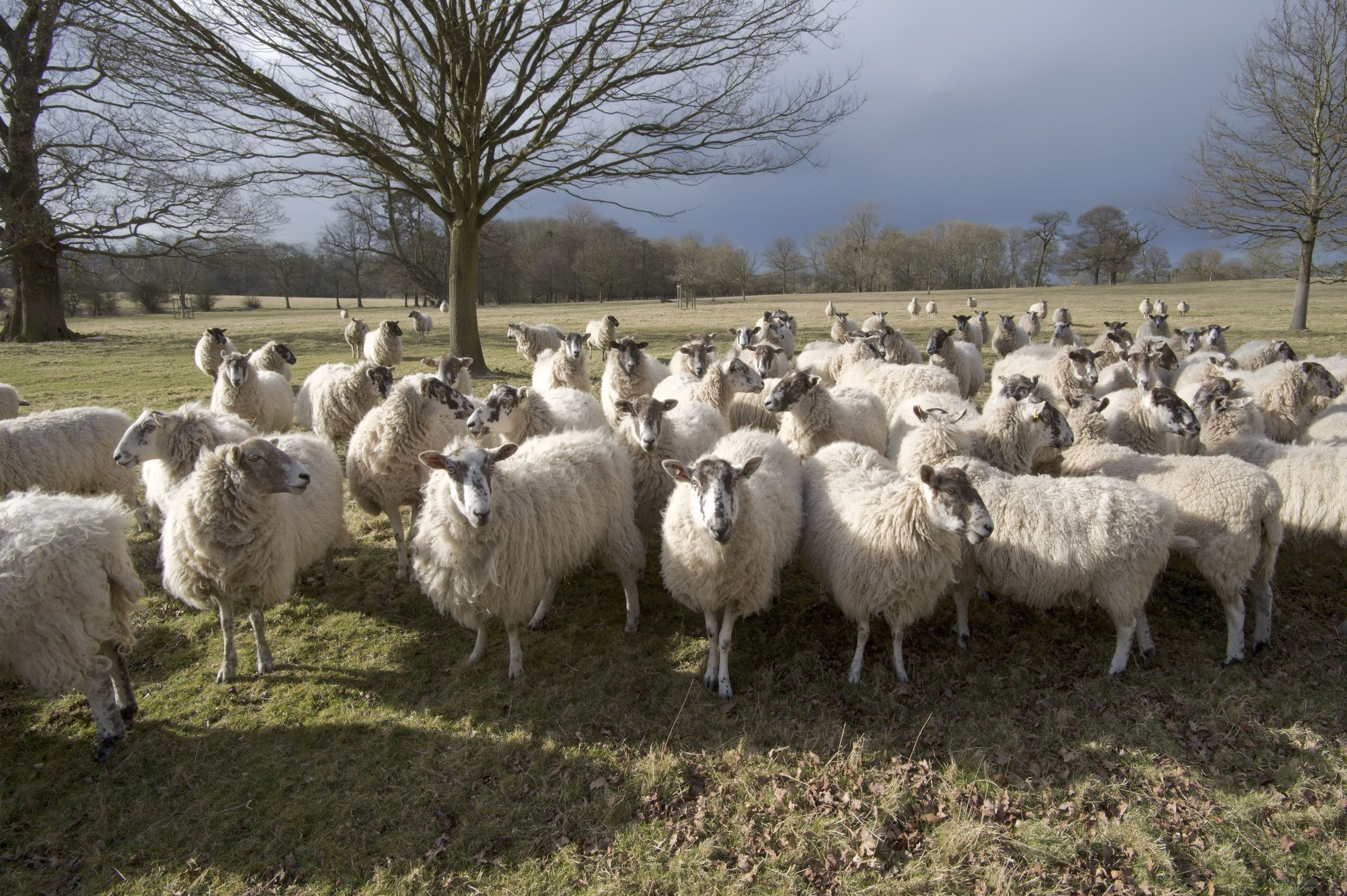 Scottish farmers fear cheaper imports and subsidy removal, says NFUS