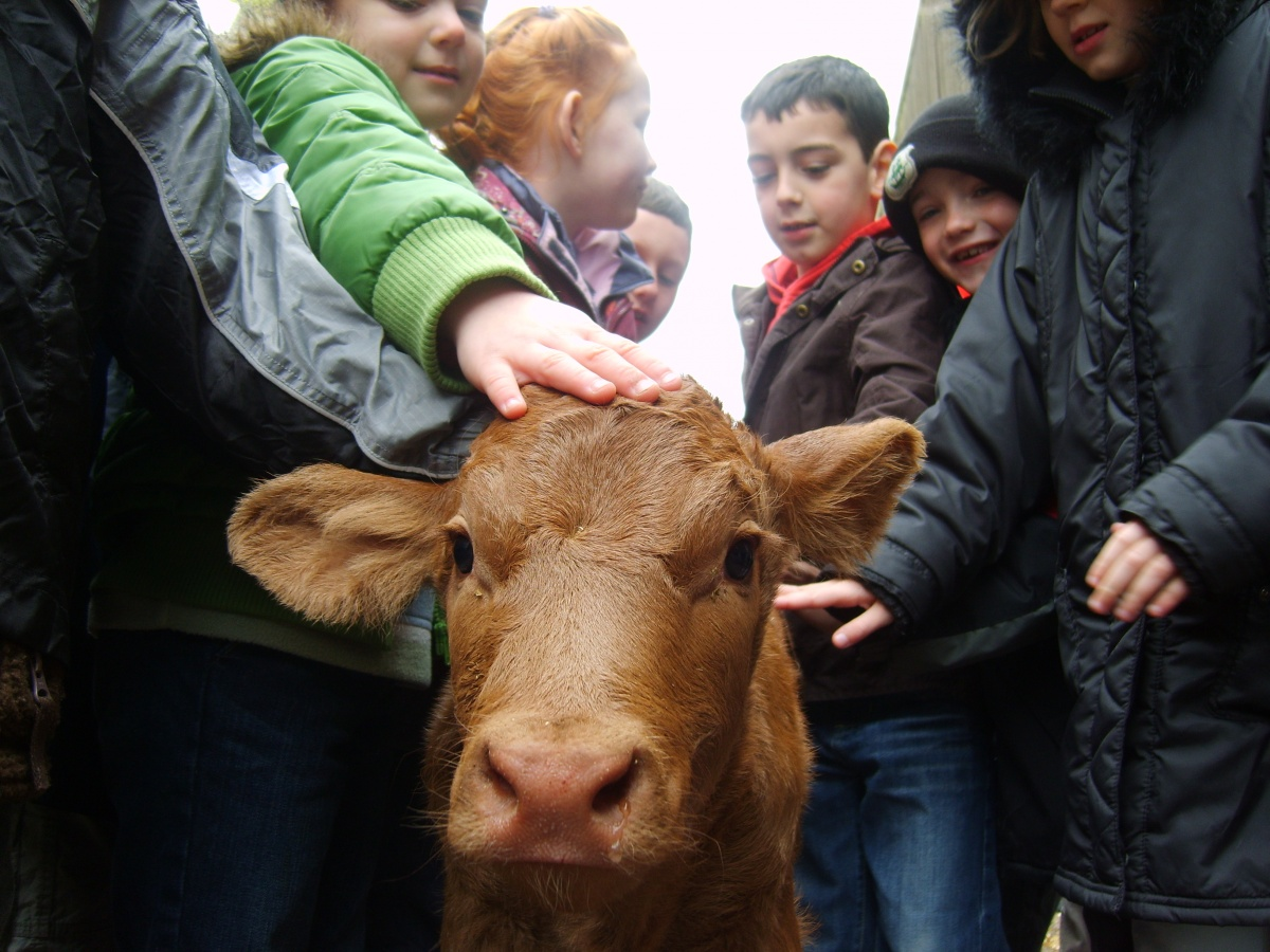 Charity to provide children from deprived areas chance to learn about farming and countryside