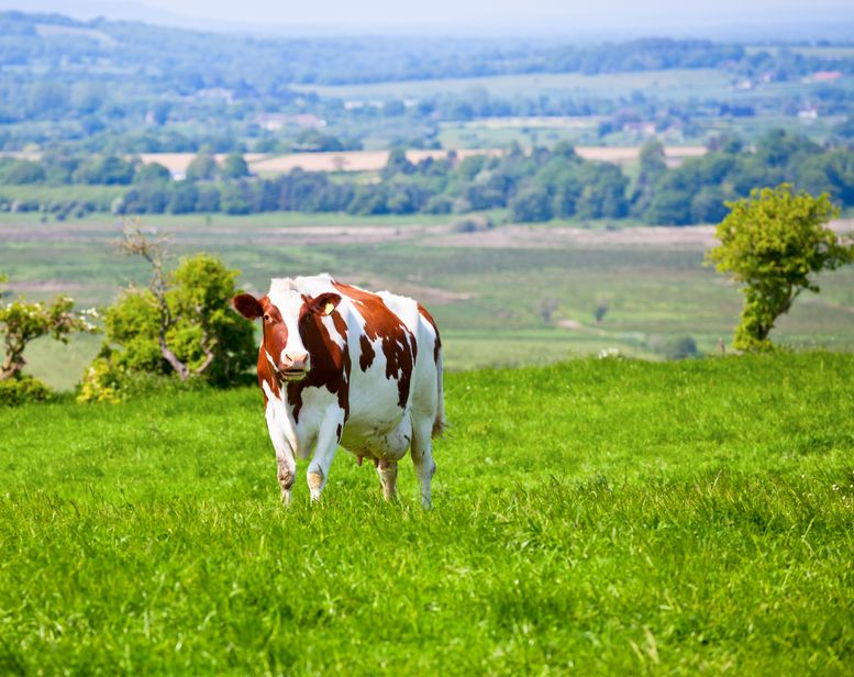 Dairy sector given opportunity to gain financial incentive to reduce greenhouse gas emissions