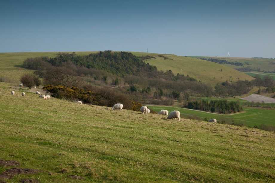 UK light lamb market facing trouble due to economic challenges in traditional markets and consumer habit changes